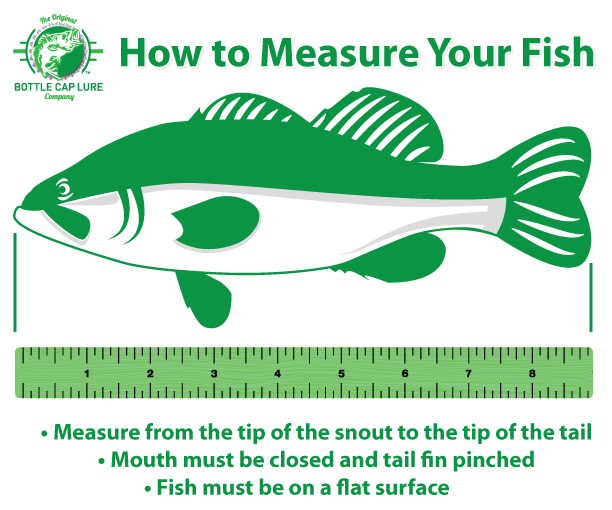 fish Measure - Battle of the Brands